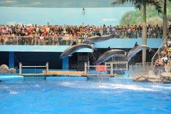 Выполнять дельфина Стоковое Изображение