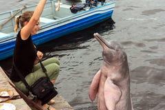 Дельфин Амазонки Стоковая Фотография