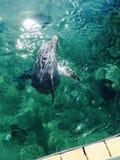 Дельфин вытекая Стоковая Фотография