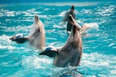 Дельфин в игре в пул Стоковое Фото