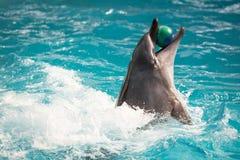 Дельфин в игре в пул Стоковое Изображение RF