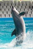 Дельфин в игре в пул Стоковая Фотография
