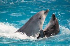 Дельфин в игре в пул Стоковое фото RF