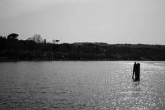 Дельфин на море Стоковая Фотография