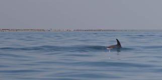 Дельфин ребра в море Стоковое Изображение RF