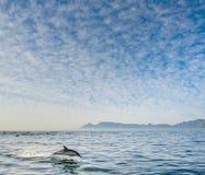 Дельфин скача из воды Стоковое Фото
