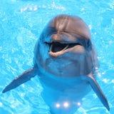 Дельфин - фото запаса Стоковые Фотографии RF