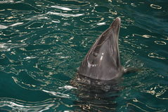 Дельфин 2 стоковая фотография