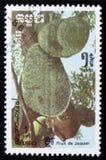 Джекфрут серия ` плодоовощей ` изображений экзотического около 1986 Стоковое Фото