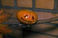 Джек-o-фонарик на ветви с кленовым листом Стоковая Фотография