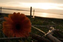 Джемини на озере стоковое фото