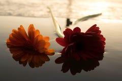 Джемини на озере стоковые изображения