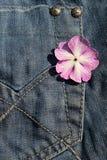 джинсовая ткань Стоковое Фото