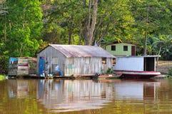 джунгли Амазонкы amazonia домашние типичные стоковая фотография rf