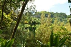 Джунгли Гаваи Стоковое Фото