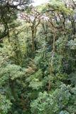 джунгли Косты rican Стоковая Фотография