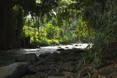 Джунгли листают вдоль реки в Ubud, Бали, Индонезии Стоковые Фотографии RF