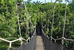 джунгли моста Стоковое Изображение RF