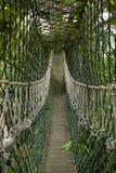 джунгли моста стоковое изображение