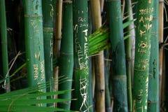 джунгли надписи на стенах стоковая фотография