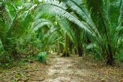 джунгли папоротника Стоковая Фотография