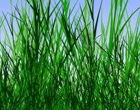 джунгли травы Стоковые Изображения