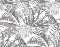 Джунгли Черно-белая предпосылка с листьями тропических пальм, извергов, столетника безшовно Изолировано на белизне бесплатная иллюстрация