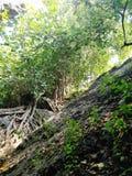 Джунгли Стоковые Изображения RF