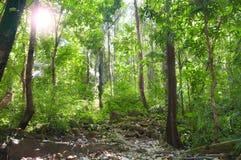 джунгли Стоковое фото RF