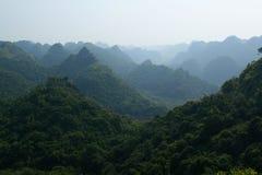 джунгли стоковое изображение