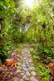 джунгли footpath стоковые изображения rf