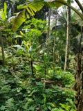 Джунгли, ubud, Бали стоковые фотографии rf