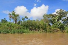 Джунгли Амазонки Стоковые Изображения