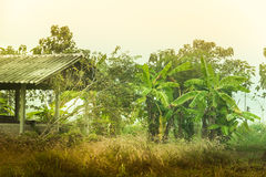 Джунгли банана Стоковые Фото