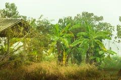 Джунгли банана Стоковые Изображения RF