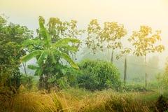 Джунгли банана Стоковая Фотография