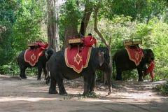 Джунгли висков Combodia стоковое фото