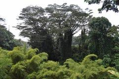 Джунгли Гаваи Стоковая Фотография RF