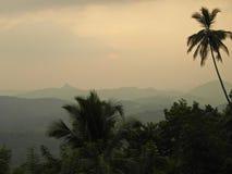 Джунгли на заходе солнца Стоковые Изображения