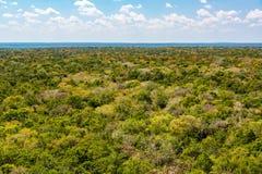 Джунгли на Calakmul, Мексике стоковое изображение