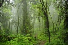 Джунгли Непала Стоковые Изображения RF