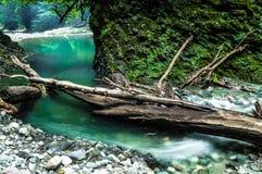 Джунгли Сочи Стоковые Изображения