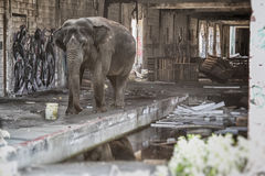 Джунгли слона городские Стоковые Фото