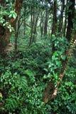 Джунгли Стоковое Фото