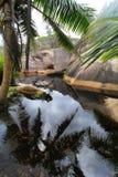 Джунгли Стоковые Изображения