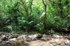 Джунгли стоковая фотография