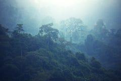 Джунгли стоковая фотография rf