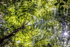 Джунгли Tamblingan пальмы зеленого цвета Бали Индонезии Стоковая Фотография RF