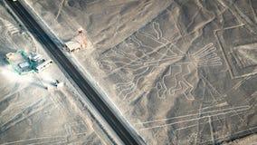 Диаграмма дерева как замечено в Nasca выравнивается, Nazca, Перу Стоковые Изображения RF