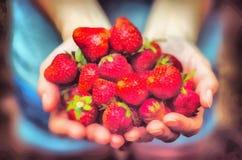 Диаграмма естественный очень вкусный сладкий плод иллюстрация штока